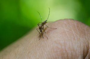 ハワイ 蚊
