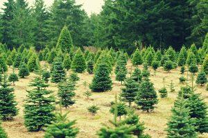 アメリカ クリスマス ツリー