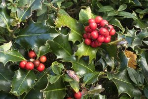 クリスマス 葉っぱ 赤