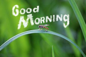 朝の挨拶 英語 おはよう